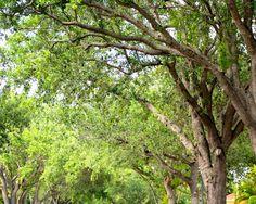 Oak Row - www.whatyagotmiami.com by whatyagotblogs