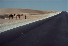 Bruno Barbey, A Beddhuin man leads a pair of camels down an asphalt road, Abu Dhabi, 1981