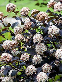 Garden Images, Plant Species, Native Plants, Planting, Tennessee, Gardens, Landscape, Flowers, Food