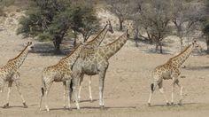 Namibia Reisebericht