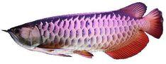 Aquarium Air Pump, Borneo, Phan, Animals, Aquarium Pump, Animales, Animaux, Animal, Animais