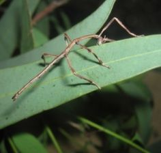 Have you ever had any unusual pets? Our most unusual pets have been our pet walking stick insects. We started our collection several years ago...