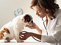Prenditi cura del tuo Cane: assicura il tuo inseparabile amico a 4 zampe!