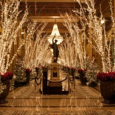 Roosevelt Hotel, New Orleans, at Christmas.... AMAZINGLY BEAUTIFUL