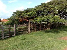 Cerca de madeira e flamboiã (Delonix regia).