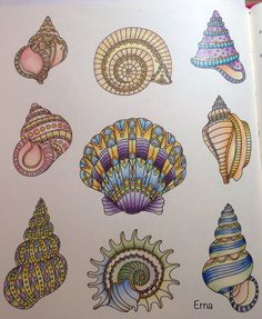 Sea shells Daydream coloring book by Hanna Karlzon