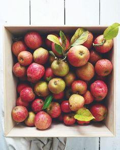 Äppelmust