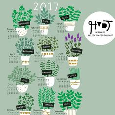 New contest today on Spoonflower. Tea towel Calendars! I designed a herbs calendar. You can vote untill wednesday next week. #spoonflower #surfacedesign #textiledesign #fabricdesign #illustration #teatowel #calendar #design #illustration #herbs #lavender #kitchen #mint #basil #rosemary #thyme #dille #parsley #oregano #2017