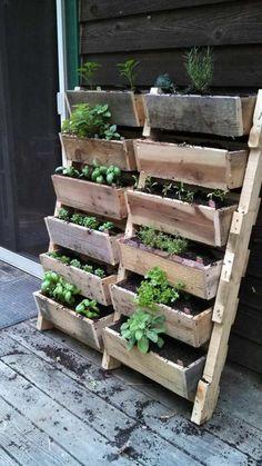 potager surélevé avec jardinières en bois