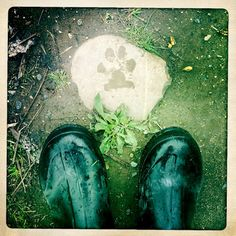 """""""Banking Midnight"""" poetry by Melissa Donovan. MY FEET & HANK'S FOOT art by Allyson Seconds."""