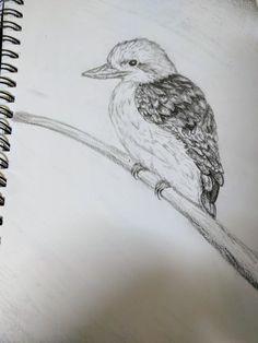Kookaburra pencil drawing