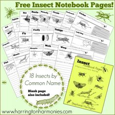 Free Insect Notebook Pages: Great supplement for Apologia& Zoology Science Education, Teaching Science, Science For Kids, Science Activities, Science Projects, Life Science, Educational Activities, Science Writing, Outdoor Education