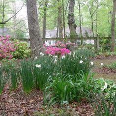 weeding is a joy in junes north carolina garden - Garden Ideas North Carolina
