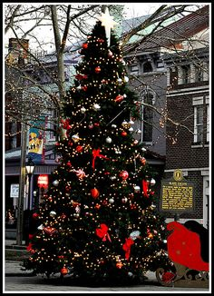 Tree in MainStrasse Village, Covington, Ky (Historic District)