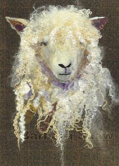 Cotswold Sheep by Barbara Shaw