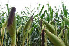 RS Notícias: Participação da agropecuária no PIB sobe para 23% ...