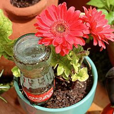 8 Clever Tricks to Keep Houseplants Happy. Houseplant Tricks and Tips - Hacks to Help Houseplants Grow Water Plants, Garden Plants, Potted Plants, Outdoor Plants, Outdoor Gardens, Container Gardening, Gardening Tips, Indoor Gardening, Recycled Glass Bottles