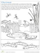 Teach your kids about the importance of preserving freshwater ecosystems with a lake habitat coloring page filled with frogs, turtles, ducks, and dragonflies.