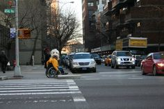 Rollin' with Owen Secret Photo, American Sign Language, Service Dogs, New Books, Street View, Nyc, Apple, Future, Apple Fruit