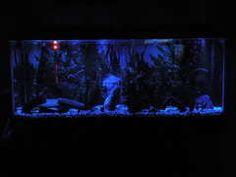 Top Aquarium Projects