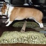 This funny dog might make you laugh but actually he is working hard to win the next dock diving event!