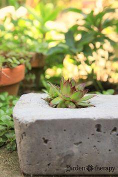 How to Make Modern Concrete Garden Planters