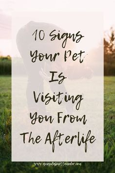 10 Signs Your Pet Is Visiting You From The Afterlife — Amanda Linette Meder Pet Loss Grief, Loss Of Dog, Dog Loss Quotes, Dog Loss Poem, Dog Qoutes, Dog Heaven Quotes, Dog Poems, Dead Dog, Pet Remembrance