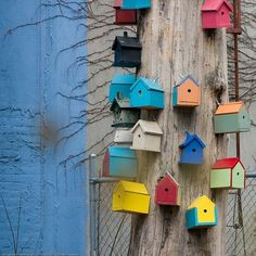 How to attract beneficial insects and animals: You can employ an army of birds, bats and other beneficial insects and animals to control pests in your garden. Pot Pourri, Bird Boxes, Beneficial Insects, Little Houses, Small Houses, Colorful Houses, Bird Cage, Yard Art, Bird Feathers