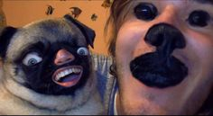 I haz random memes to laugh at.pewds and markiplier also Markiplier, Animal Face Swap, Animal Faces, Can't Stop Laughing, Laughing So Hard, Foto Fails, Funny Dogs, Funny Animals, Funny Memes