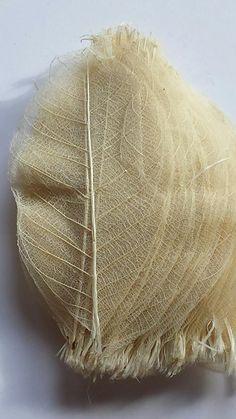 Folhas Esqueleto - Branco ***Disponível para Venda