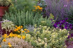 Chives, sage, lavender, calendula, violas..my green thumb just withered.  Herb garden glory