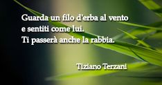 Terzani Watch a blade of grass in the wind and feel as it does. So will your anger pass as well. Quotes Thoughts, Positive Thoughts, Deep Thoughts, Book Quotes, Words Quotes, Wise Words, Sayings, Italian Phrases, Italian Quotes