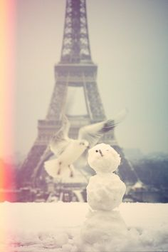 BIRD&SNOW