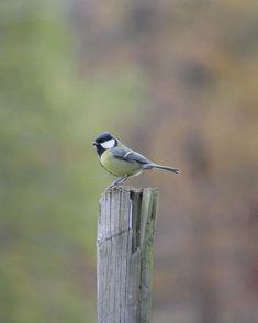Spring Garden, Birds, Animals, Wings, Animales, Animaux, Bird, Animal, Animais