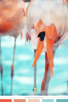 This color inspiration oozes warm breezes sunny days. Colour Schemes, Color Patterns, Color Combinations, Flamingo Color, Flamingo Photo, Colours That Go Together, Color Me Beautiful, Creature Comforts, World Of Color