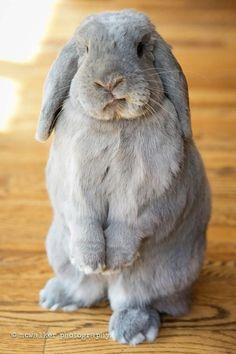 Bunny - fine picture