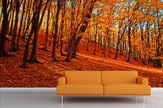 Autumn Forest Wallpaper Murals