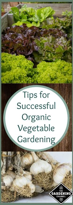 Top tips and hacks for a successful organic vegetable garden. Learn organic gardening the easy way for beginners!