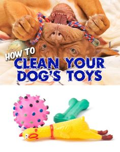 Because dog's generally use their mouths to play with their toys, it's important that their toys be cleaned and disinfected on a regular basis. Not only to wash away dirt and grime, but to kill bacteria and other microbes that tend to thrive on those slobber-laden, dragged-through-the-dirt, tugged-on, chewed-on, and loved-to-the-extreme toys.