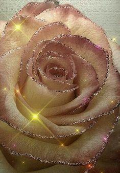 Share the wonderful photographs of flowers. Beautiful Flowers Wallpapers, Beautiful Rose Flowers, Beautiful Gif, Love Rose, Flowers Gif, Rose Bush, Color Rosa, Flower Wallpaper, Belle Photo
