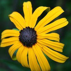 #sonnenhut Plants, Plant, Planets