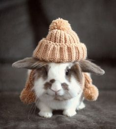 Even bunnies need a hat sometimes... Looking so cute !! :)