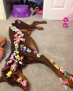 This dog loves his human kid