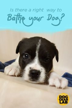 Is your dog stinky? How often should you bathe your dog? Do you need to give your dog a bath? Check out these dog owner hacks on the right way to bathe your dog. Best Puppies, Best Dogs, Dogs And Puppies, Puppy Grooming, Dog Hacks, Dog Photography, Dog Training Tips, Dog Care, Dog Owners