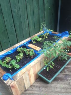 Raised bed from old pallets - no plastic!