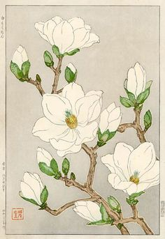 hanga gallery . . . torii gallery: Magnolia by Kawarazaki Shodo