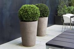 Contemporary Planter look -  with Boxwood | DMM Studio