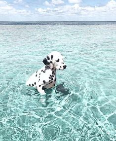 Super Cute Puppies, Baby Animals Super Cute, Cute Little Animals, Cute Dogs And Puppies, Cute Funny Animals, Baby Dogs, Doggies, Puppies Puppies, Funny Dogs