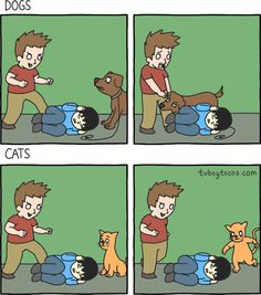 Cães vs Gatos