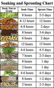 A Life Unprocessed website shares how to grow seeds to sprouts. You can grow a huge different variety of seeds that have different nutrients and flavors. Anyone can grow fresh sprouts in their kitchen on the counter top in a mason jar. It is super easy and a great teaching tool to encourage children to grow what they